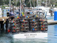 Bodega Bay 064