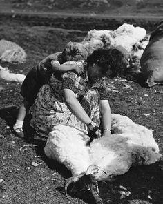 Sheep shearing (Harris Tweed Authority - http://www.harristweed.org/blog/viewsfromtheislands)