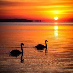 @Regrann from @hebenj -  Romantic couple in sunrise Balatonszemes Hungary ____________________________________________________ #couple #love #sunrise #balaton #lakebalaton #birds #nature #natureporn #naturephotography #landscape #landscapephotography #sun #hungary #balaton #balatonlelle #hdr #clouds #colorful #clouds #cloudporn #canon #photography #travel #canonhun  ___________________________________________________ @ig_budapest @travel.map @top_landscape_photo__ @gurushots…