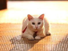 Twitter / nekozamuraiinfo: 「我が街でも放送を!」とのお声がたくさん届いています。涙で前が見えません…(嬉涙)みなさまの応援次第では放送される局が増えるかもしれません!よろしく頼む…と玉之丞さまも申しております。#猫侍 Neko, Kittens, Cats, Kitty Cats, Kitten, Baby Cats