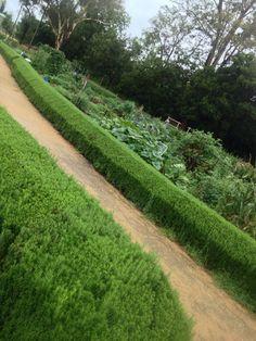 Garden venue - Camden Community Farm ... Ideal wedding venue