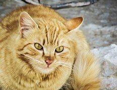 Kissa, Eksyä, Söpö, Kodittomia, Kitty