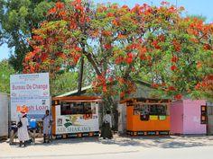 Sjoesjoe in Botswana: Red blossom