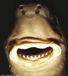 Scary Animal Mouths - Cookie Cutter Shark  Wonder where some of the scary monster ideas for movies come from...