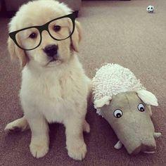 "8,766 Gostos, 24 Comentários - Puppies Dogs Pets (@puppyskit) no Instagram: ""Need goals ❤ Follow: 🔥 @puppyskit Follow: 🔥 @puppyskit"""