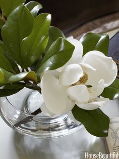 White Magnolias. Photo: Bjorn Wallander. housebeautiful.com. #flowers #magnolias #white_magnolias
