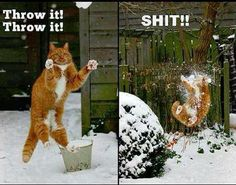 Winter fun! #cats #humor