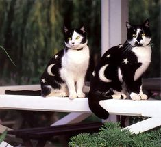 """See Stunningly Painted Cats of the Book """"Why Paint Cats?"""" 
