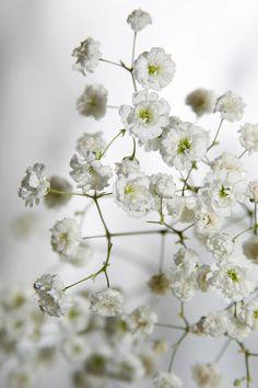 039 Flowers | White