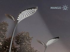 Designer Adam Mikloski has come up with a beautiful design for solar powered street lights in India. Mimicking the structure of a seedling and the shape of mango leaves, the concept design captures not just sunlight but also rain to power the lamps.