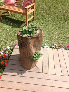 Vaso feito com tronco de arvore plantaram morango.