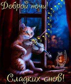 Открытки спокойной ночи кот