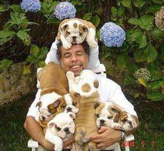 14 Signs You Are A Crazy English Bulldog Person