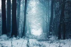 Fairyland. by MateuszPisarski on DeviantArt