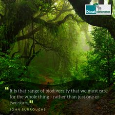 Biodiversity is referred to as the web of life as many microorganisms, plants and animals interact with each other. The relationships between species are an important part of biodiversity. We cannot just protect one or two species. Every single organism is interlinked in a complex web and if one falls it will result in the whole ecosystem eventually collapsing. . . . . . #MotivationMonday #Conservation #Dilmah #NoCompromise #DilmahConservation #motivationalquotes #Mondaymotivation Shared Reading, Make Business, Microorganisms, Educational Programs, Human Services, Social Justice, Monday Motivation, Conservation, Motivationalquotes