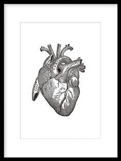 Gammal illustration av hjärtats anatomi