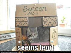 Saloon Kitty