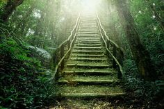 Stairs of the forest