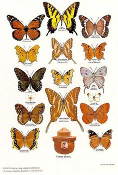 A Collection Of Smokey Bear's Best Nature Posters: Smokey Bear's Butterfly Poster Butterfly Identification, Tree Identification, Smokey The Bears, Nature Posters, Poster Series, Cool Posters, Illustrations, Amazing Nature, Wildlife