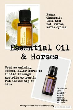 Horses and essential oils.... There not just for humans. www.mydoterra.com/stephanienunag