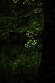 """firmamente: """" in the woods… by seeker0204 """""""