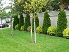 love the types of bushes and how they alternate. along the back fence? along the sides of the house?