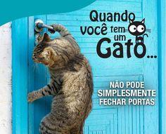 foto engracada de gato para facebook