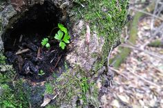 new Life of nature