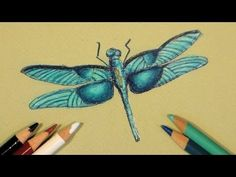 New Art and Craft Tutorial Videos 4 times a week! My name is Lindsay Weirich, AKA the Frugal Crafter. My videos showcase a w. Colored Pencil Tutorial, Colored Pencil Techniques, The Frugal Crafter, Coloring Tutorial, Insect Art, Colouring Techniques, Coloured Pencils, Color Pencil Art, Coloring Books