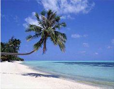Islamorada, FL -- Google Image Result for http://beachpassion.com/wp-content/uploads/2012/01/beach.jpg