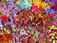 Bundles of flowers