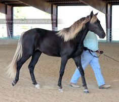 black silver dapple 2 by ~venomxbaby on deviantART My favorite horse color!