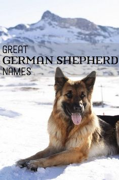 Dog Names Discover Good German Shepherd Name Ideas Have you just brought a German Shepherd puppy into your family? Here are some of the best name ideas for your new dog to suit their protective playful nature. Australian Shepherd Husky, Australian Shepherds, Female German Shepherd, German Shepherd Training, German Shepherd Puppies, Baby German Shepherds, Girl Dog Names, Female Dog Names, Police Dog Names