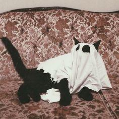 williamcrisafi: My ghostcat
