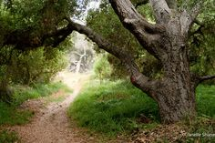 https://flic.kr/p/fd8smf | Los Penasquitos grove | Los Penasquitos canyon has…