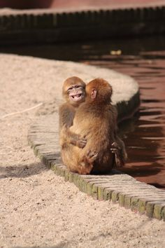 Hugging monkeys. I seriously couldn't stop laughing when I took this picture at Ouwehands Zoo, Rhenen, The Netherlands.