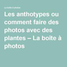 Les anthotypes ou comment faire des photos avec des plantes – La boîte à photos