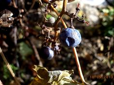 #blueberry #berries