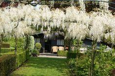 Wisteria, Sidewalk, Flowers, Summer 3, Pergola Ideas, Recherche Google, Gardens, Tips, Image
