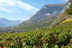 Valais | Swiss Wine