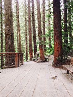 Redwood Observation Deck. Yoga at The Hoyt Arboretum. Portland, Oregon