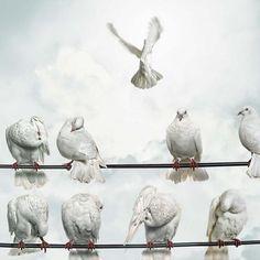 Animal Photography by Gandee Vasan