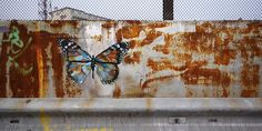 Butterfly by Martin Whatson, via Flickr