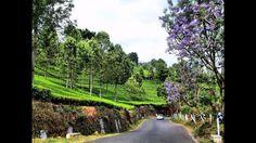 A Visit to Coonoor Tea Estates, The Nilgiris, Tamil Nadu, India