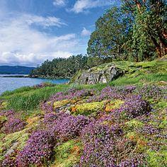 10 Best Wildflower Hikes | Point Reyes National Seashore, California | CoastalLiving.com