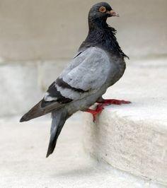 Dumpling Pigeon Leggings