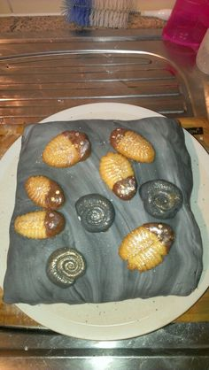 Fossil cake