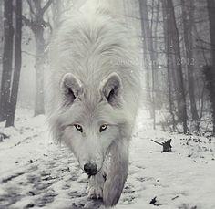 lobo wallpaper - Buscar con Google
