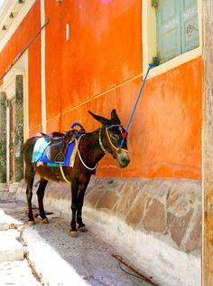Waiting Donkey - Fira, Kyklades Grecia