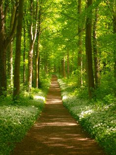 Forest path (Dalkeith Country Park, near Edinburgh, Scotland) by gingiber cr.🏴🇬🇧